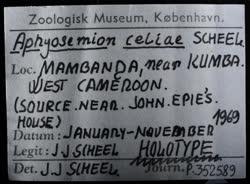 03-0-Copr_1969-JJ_Scheel_Holotype_NHMD_P352589t.jpg