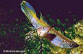 00-0-Copr_1997_Winfried_Stenglein-363x238x24-19036t.jpg