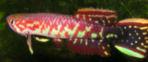 00-0-Copr_2012-Kenjiro_Tankat.jpg