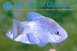 09-0-Copr_2019-Aquarium_Glasert.jpg