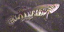 00-4-Copr_1997_Richard_Sexton-213x107x24_9020.jpg