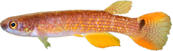 00-0-Copr_2021-Aquarium_Glasert.png