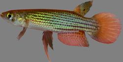 00-0-Copr_2018-Aquafishert.png